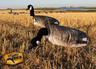 White Rock's new windsock Canada Goose decoys.