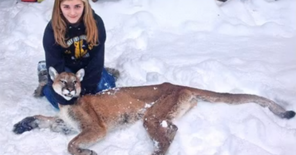 Time 2014 Person Of The Year >> Eleven-year-old Girl Shoots Mountain Lion Stalking Her Brother - OutdoorHub