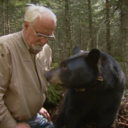 Researcher Lynn Rogers with the black bear female he named June.