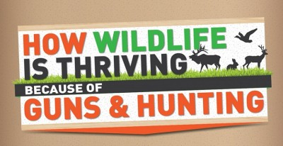 How WildlifeisThrivingBecauseofGuns Inforgraphic feature