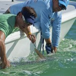 "Bass2Billfish host Peter Miller will compete in the ""Ding"" Darling Tarpon Tournament."