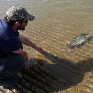 Johnny Summers, Jr., of Pottsboro releases the 2.93-pound black crappie he caught March 13 back into Lake Texoma.