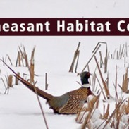 Winter Pheasant Habitat report