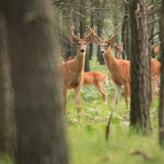 Iowa officials have reported the state's first confirmed case of CWD in Allamakee County.