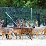"Pope and Young Club members strongly oppose ""canned"" hunting, transporting and selling ""farm raised"" cervids."