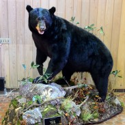 Bruce Headley's state record bear will now reside at the Pequest Hatchery.