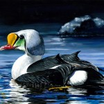 A king eider by 16-year-old Si youn Kim will be featured on the 2014 Junior Duck Stamp.