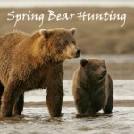 Spring Bear hunting the Revolution