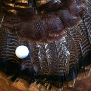 There are more similarities between turkey hunting and golfing than you might realize! Image by K.J. Houtman.