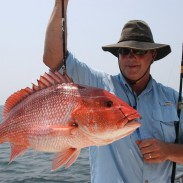 Big red snapper, like this one Gregg Miles of Winfield caught on the Fairwater II out of Orange Beach, have been commonplace in recent years.