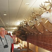 Glenn Helgeland admires some of the many buck mounts on display at the Deer & Turkey Expo in Madison, Wisconsin on April 5.