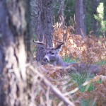 Wisconsin lawmakers have drastically eased restrictions on urban bow hunting in the hopes of drawing more hunters.