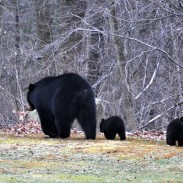 A strange series of events occurred when one man thought he was being pursued by a bear, which police said was a result of drug-induced hallucinations.