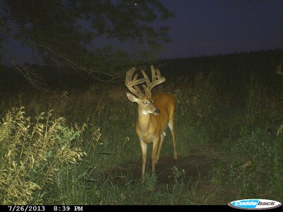 A good mineral like Monster Raxx enhances a buck's ability to grow antlers without robbing nutrients from its skeletal system.