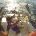 billfish attack