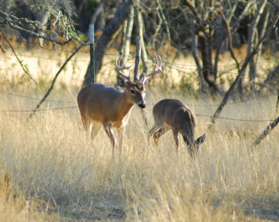 Unless the Missouri General Assembly overrides Governor Jay Nixon's vetoes, captive deer will remain under the authority of the state Department of Conservation.