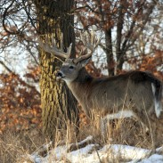 When planning an out-of-state bowhunting road trip, most hunters never look beyond the peak of the rut. However, there are plenty of other opportunities to be had at various points throughout the season. Image copyright iStockPhoto/Lynn_Bystrom.
