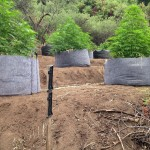 Officers found 180 marijuana plants on a California grow site that diverted water from a nearby stream.