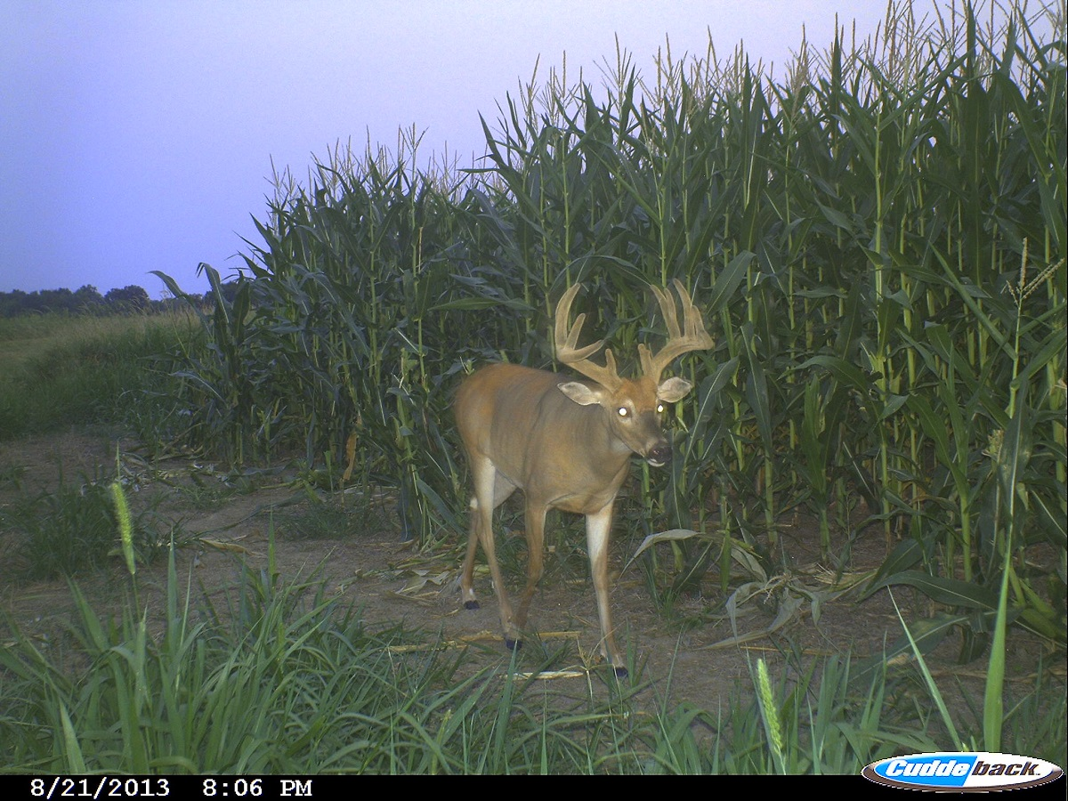 Hunting Deer in the Final Approach - OutdoorHub