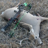 """This 10-point buck the author shot in the early season is the result of proper stand placement. in the """"final approach."""""""
