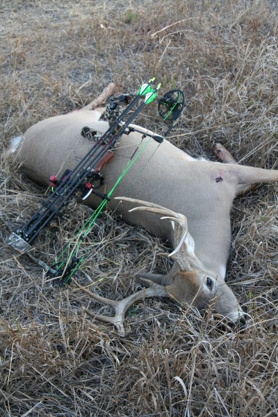 "This 10-point buck the author shot in the early season is the result of proper stand placement. in the ""final approach."""