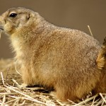 Residents are warned after the first confirmed case of bubonic plague in Colorado since 2011.