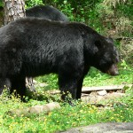 One hunter can count himself lucky to be alive after being attacked by an injured bear.