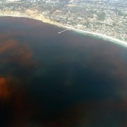 Anglers are worried that the massive red tide sighted off the Florida coast could move closer to shore.