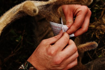 The opportunity to wrap your tag around a velvet antler has a lot of appeal to most hunters. There is a short window of opportunity to do it and a select few places to hunt whitetails before the velvet comes off.