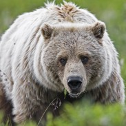 Wyoming officials are urging hunters to be cautious following two recent bear attacks in the state.