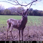 Plant the right crops in the right places at the right times to have bucks in your food plots during hunting season.