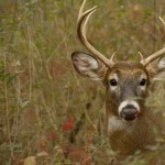 Michigan has a lot to offer nonresident whitetail hunters, including ample amounts of public land.