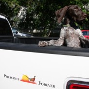 Pheasants Forever edition truck unveiling on Oct. 4 at Apple Autos in Apple Valley, Minn.