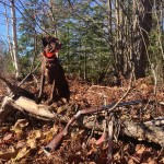 """Hunters know that sporting dogs aren't just """"tools"""" of the trade. They're members of the family, too, and every upland hunter should be prepared to provide care for their dog in the event of an emergency. Image by Britney Starr."""