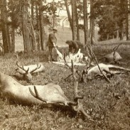 Yellowstone elk poached by Fredrick and Philip Bottler  near Mammoth Hot Spring during the spring of 1875.