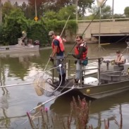 Biologists spent three days in Lake Erie capturing and tagging grass carp, as well as looking for strategies to prevent bighead and silver carp from coming into the lake.