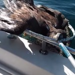 This fledgling-in-need was rescued by a Canadian angler.