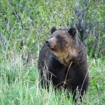 Alberta recorded its second bear-related fatality this year after a hunter was killed in Kananaskis Country.