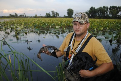 Joe Robison takes a blue-winged teal from his Lab.