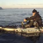 kayakshark