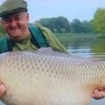 Common carp, a distant relative of goldfish, can grow quite large.