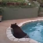 poolbear2