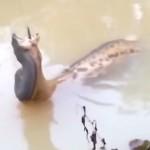 snakeeatsfish