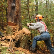 Janice Penn, left, of Highbridge and John Olson of Ashland cut into the good oak with a crosscut saw.