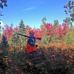Michigan has a lot to offer upland hunters--including some beautiful fall scenery. Image by Britney Starr.