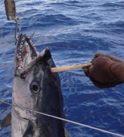 Did This Australian Angler Catch a Tunicorn
