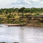 Will Burrard-Lucas captured this amazing footage of migrating wildebeest over the course of five days.