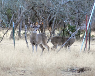 Chronic wasting disease has made its way to an Ohio captive deer herd.