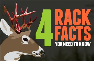 4RackFacts_FeaturedImage
