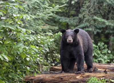 One Minnesota hunter is lucky to be alive after a brutal fight with a wounded black bear.